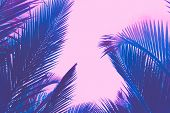 Copy Space Pink Tropical Palm Tree On Sky Abstract Background. Summer Vacation And Nature Travel Adv poster