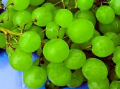 Ripe Bunch Of Grapes In The Garden. Close-up. Bunch Of Green Grapes. A Lot Of Ripe Grapes Close-up. poster