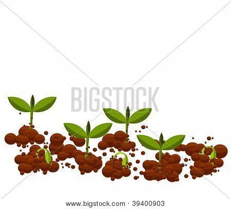 Plantas jóvenes de germinales