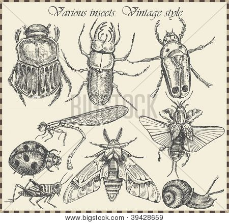 vector set insects in vintage style