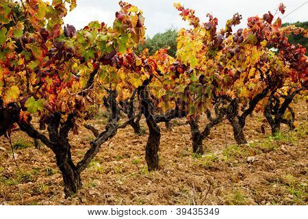 Vineyards of Bandol