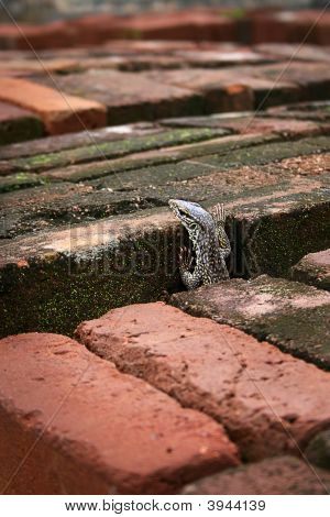 Lizard through the bricks