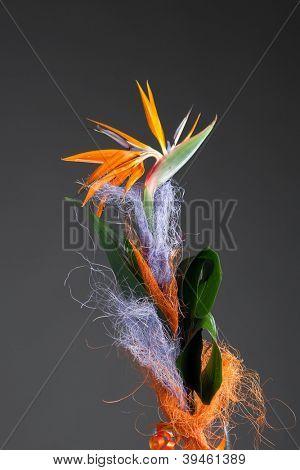 bird of paradise flower (strelitzia) on grey background