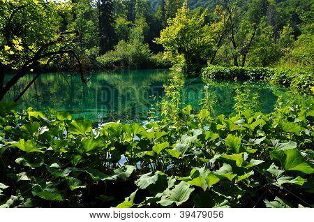 Beautiful turquoise lake in Plitvice, Croatia