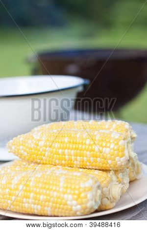 Fresh Corns On White Plate