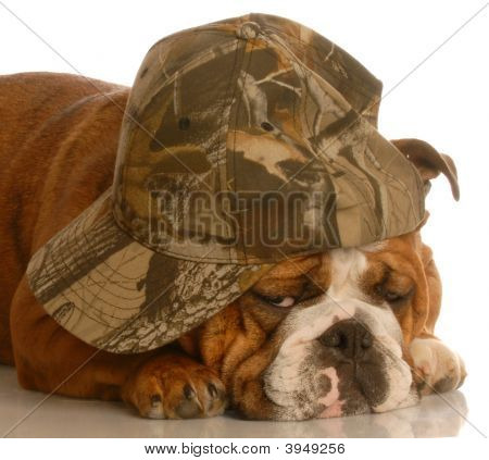 Bulldog Wearing Camouflage Hat