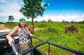 picture of  jeep  - Young woman in a safari jeep in Sri Lanka met a group of elephants - JPG