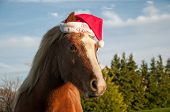stock photo of horse wearing santa hat  - Chestnut pony wearing a red Christmas hat - JPG