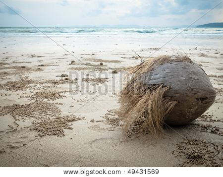 A Coconut On The Beach
