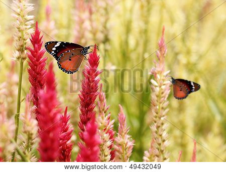 Beautiful Monarch Butterfly On Summer  Grass Flowers.