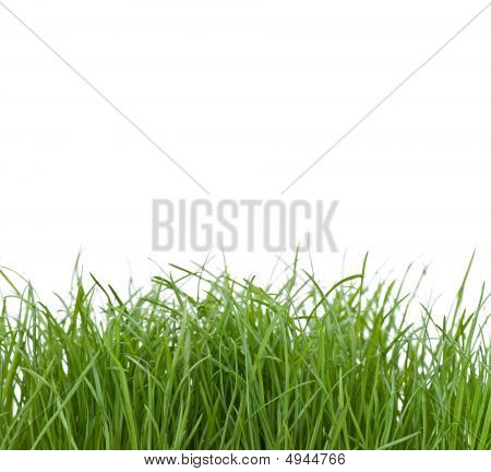 Unkempt Grass