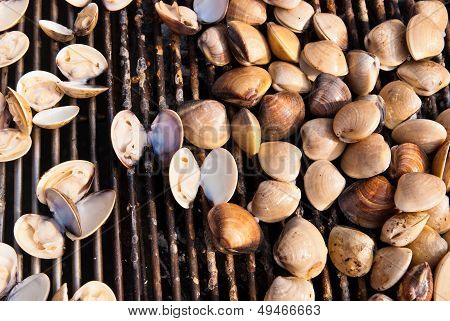 Fire Grilled Seashell On Bbq.