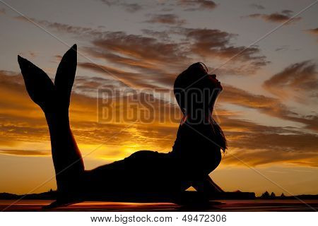 Mermaid Silhouette On Belly Fin Up