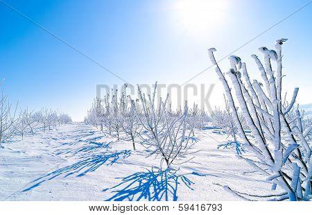 seedlings in winter