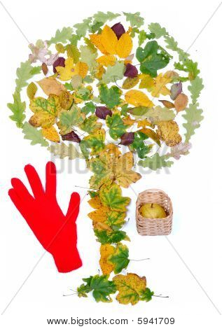 Leaves In Shape Of Tree Isolated And Red Glove