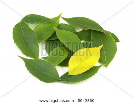 Yellow Leaf Among Greens  Uniqueness