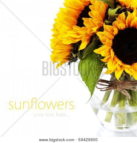 Sunflowers in a  vase over white (with easy removable sample text)