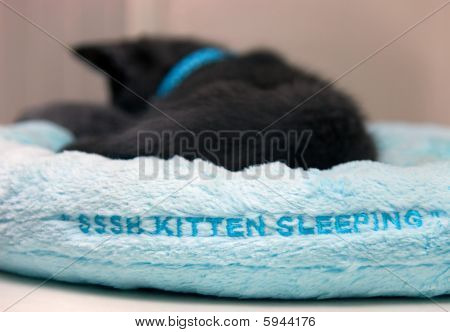 Kitten Sleeping In A Soft Blue Bed