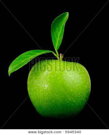 Fresh Green Apple Closeup