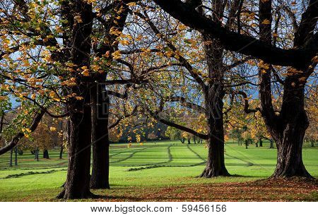 Swath In Autumn