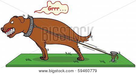 Barking Dog Never Bite