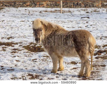 Light Brown Pony