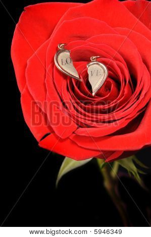 Broken Gold Heart In A Red Rose