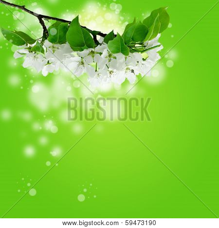 a branch of blooming apple tree over abstract spring background
