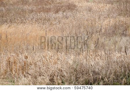 Field Where Grass Is Dead In Winter