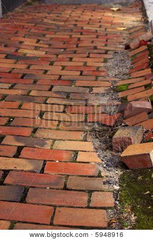 Cracked Brick Walkway