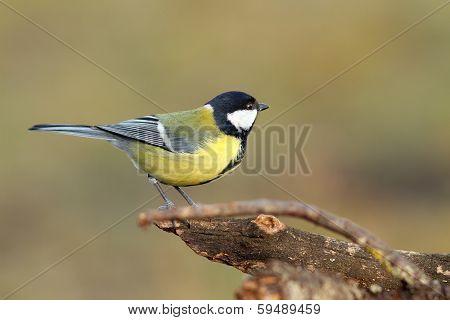 Beautiful Tiny Bird In The Garden