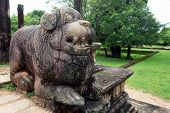picture of stone sculpture  - Stone lion sculptures of Polonnaruwa in Sri Lanka - JPG