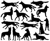stock photo of wolf-dog  - Set of editable vector silhouettes of wolves in different poses - JPG