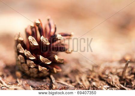 Fir Cone As Autumn Background