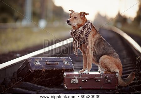The Red Dog Sits On A Suitcase On Rails