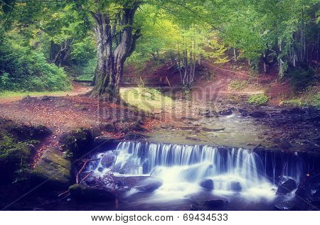 Summer landscape with a beautiful beech forest. Mountain stream with cascades. Soft effect. Color toning