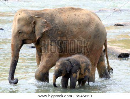 Elephants Life