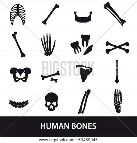 Human Bones Set Of Icons Eps10