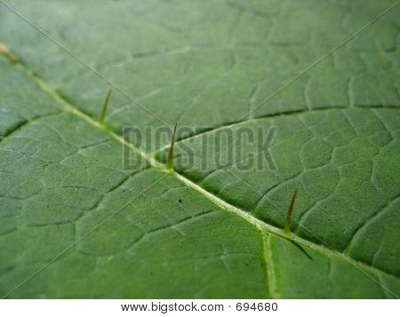 Spike Leaf