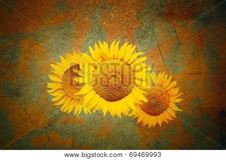 Background With Sunflowers In Grunge Style
