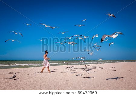 Woman Feeding A Flock Of Seagulls On A Beach