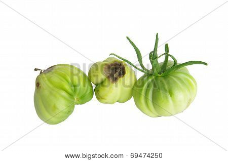 Dry Rot Tomato  Isolated