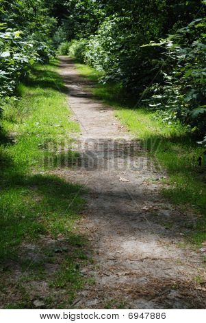 Trail Through Wooded Area