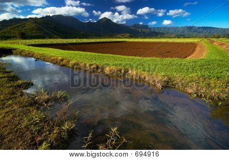River In Taro Fields