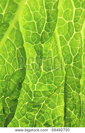 Savoy Cabbage Green Leaf - Close-up