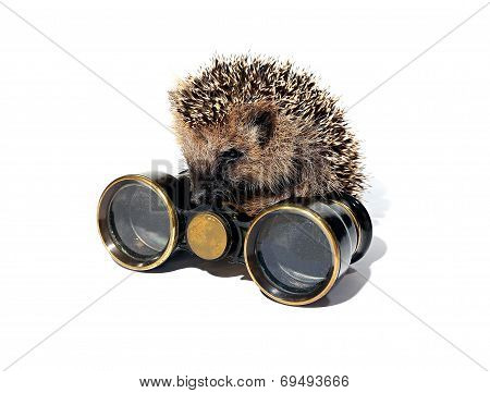 Small Forest Hedgehog With Old Binoculars Isolated