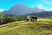stock photo of bear-cub  - Family of bears with a majestic mountain background - JPG