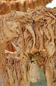 picture of tobaco leaf  - Picture of a Drying tobacco leaves on sun