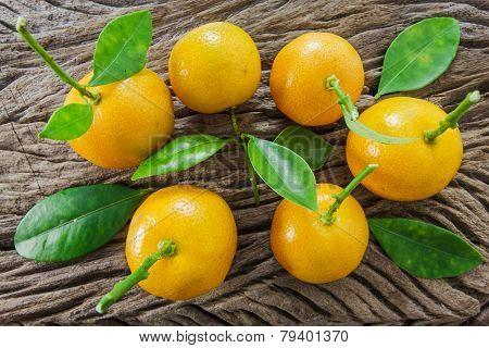 Oranges (citrus Japonica Thunb) On A Wooden