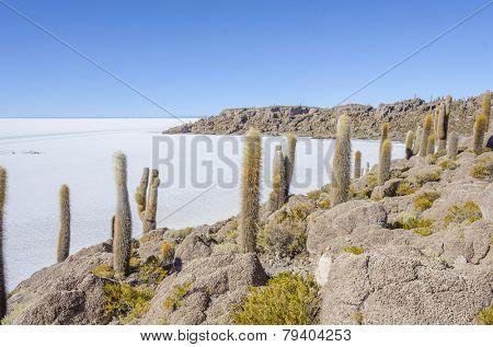 Salar de Uyuni, Bolivia - Isla Incahuasi